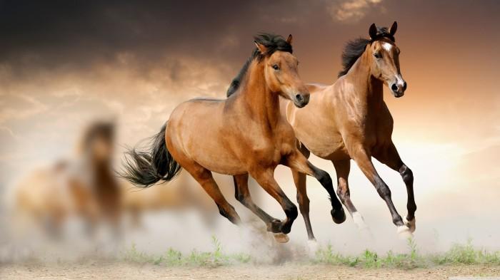 3840x2160_beg-loshadi-koni-skorost-zhivotnoe